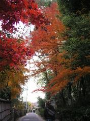 11gatu kyoto 016.jpg