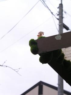 201005gatu2 045.jpg