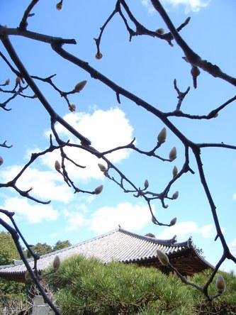 akishinodera (32).jpg
