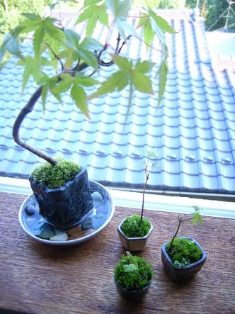 bonsai (13).jpg